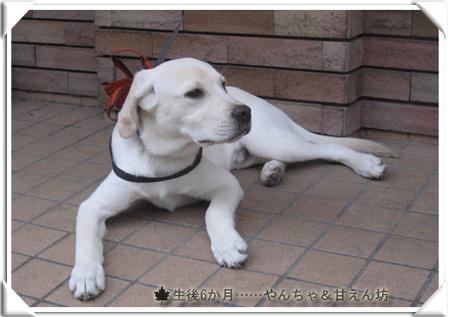 yokomote_wan004.jpg