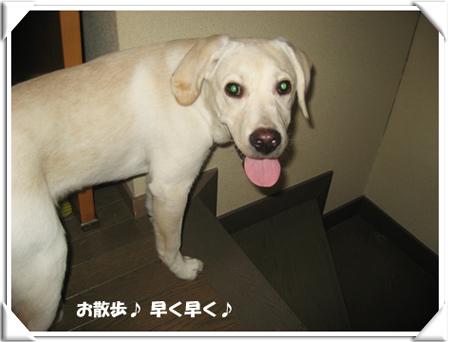 yokomote_wan006.jpg