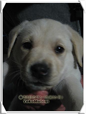 yokomote_wan2_001.jpg